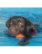 Hundesvømning